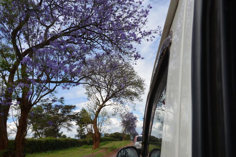 East Africa Safari 50.jpg