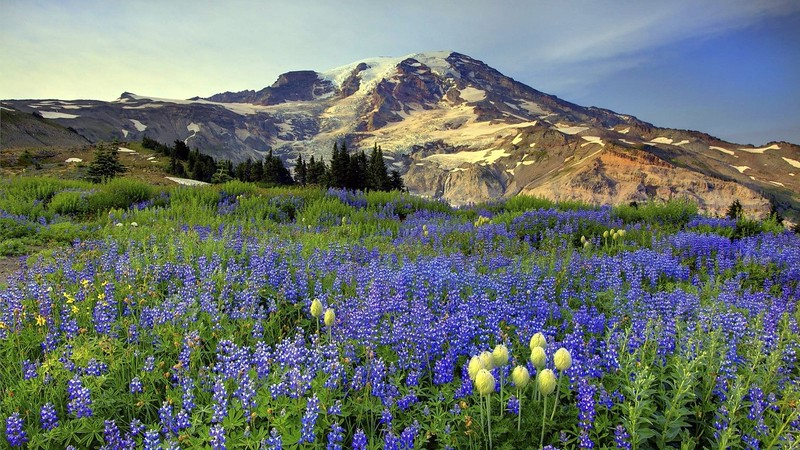 mt-rainier-wallpaper-7.jpg