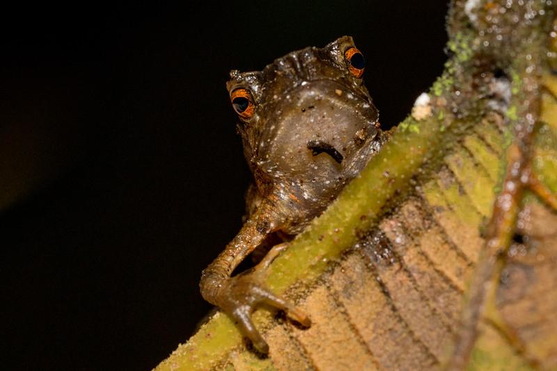 Biodiversity Group, _DSC5204