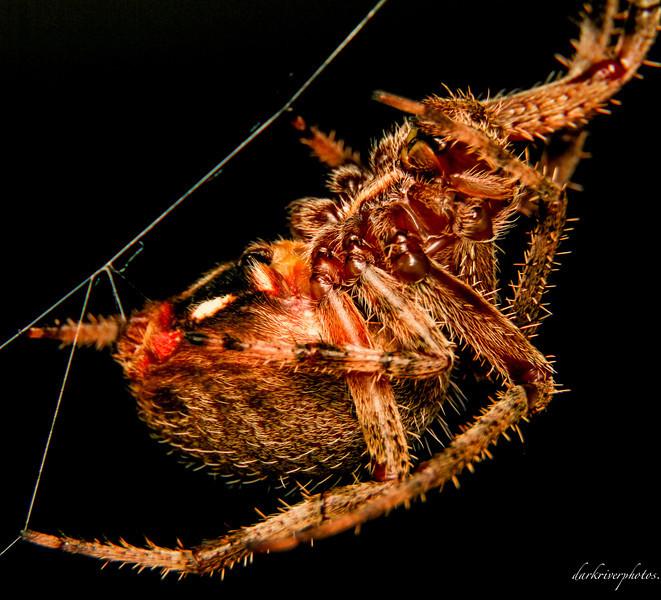 Makeing a spider web  jpg.jpg