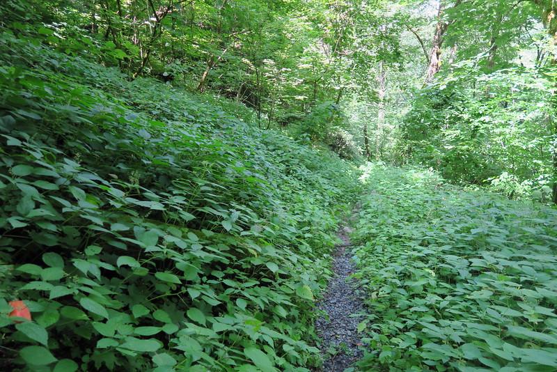 Enloe Creek Trail - 3,750'