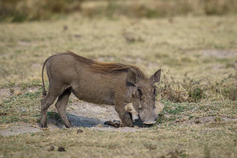NgorongoroCrater-20181003-0102.jpg