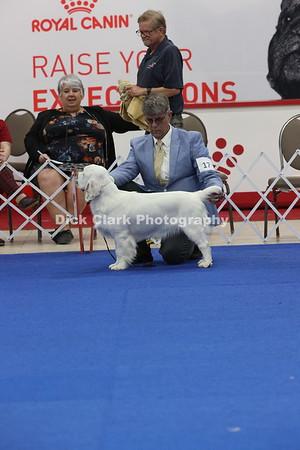 Puppy Dog 9-12 Months