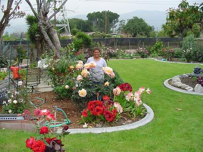 Amaryllis Garden