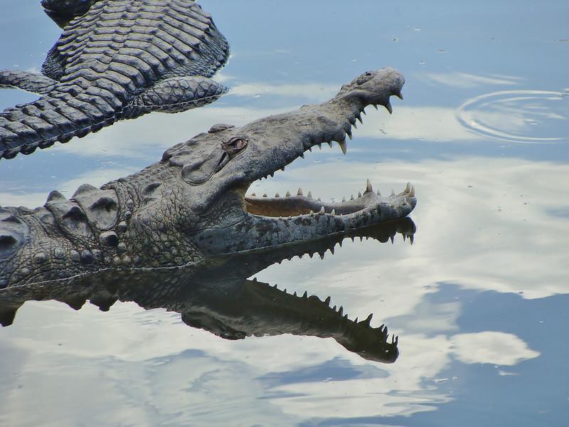 Gator 1.JPG
