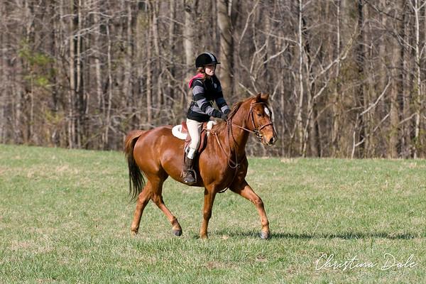 78 Chestnut Horse