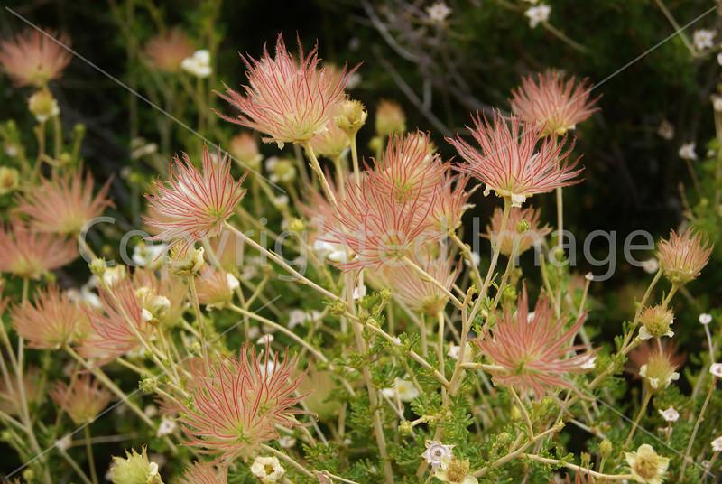 RR86 Whispy Pink Flowers.JPG
