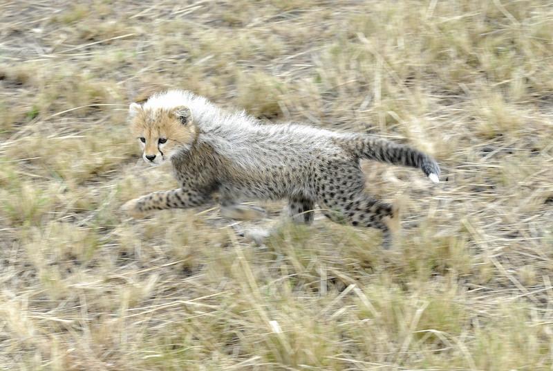 Kenya Aug 2007 041.JPG