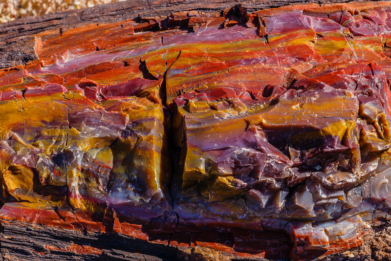 Petrified wood displays a myriad of color