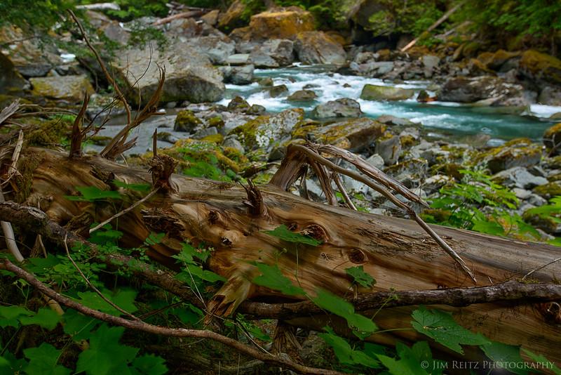 Beautiful log along the Skokomish River, Staircase Rapids trail.