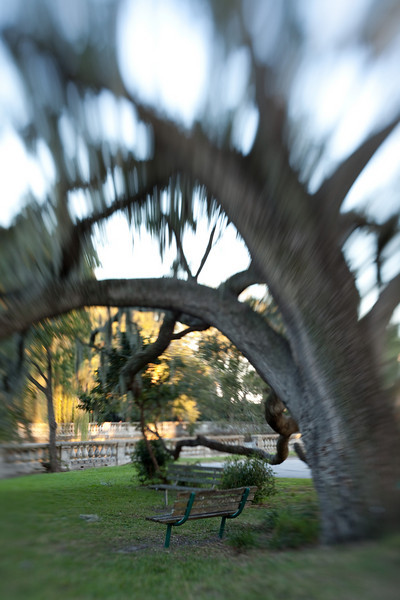 Lensbaby_tree_20091105_193.jpg