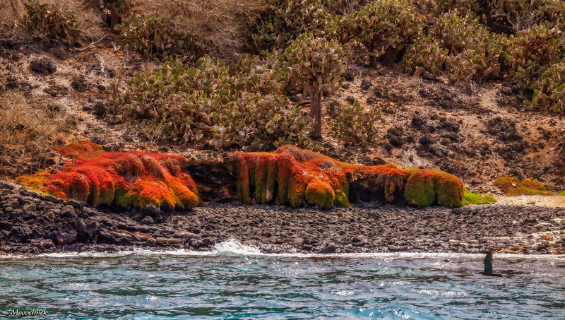 Moss In The Galapagos