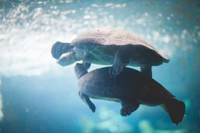 2014 10 25 Dallas World Aquarium-32.jpg