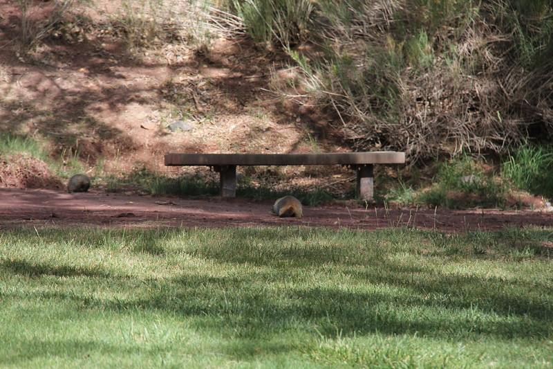 20170618-062 - Capitol Reef National Park - Camp Ground Rd.JPG