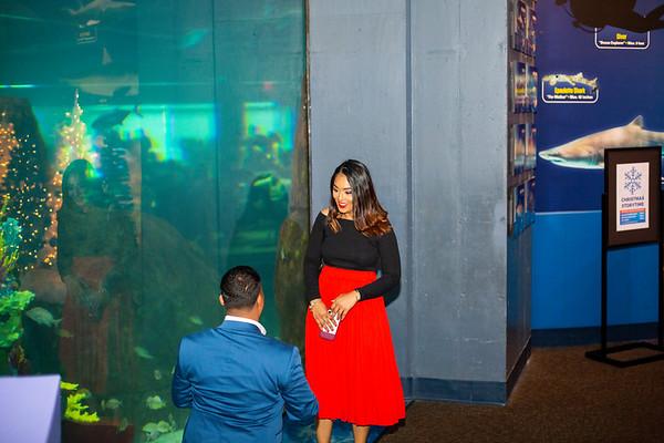 Prem Aquarium Proposal, Philly