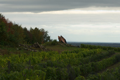 Vineyard Domaine des Côtes d'Ardoise