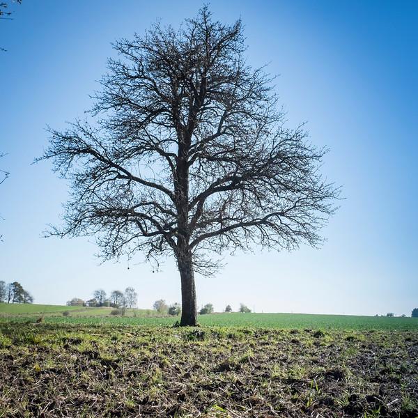 tree-037.jpg