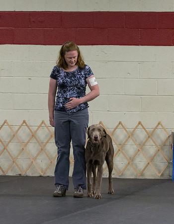 Oriole Dog Training Club - August 2013