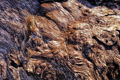 Barkscape: Spruce Burl   Olympic National Park