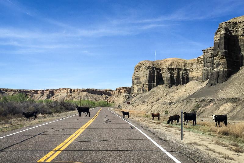 Utah Traffic Jam
