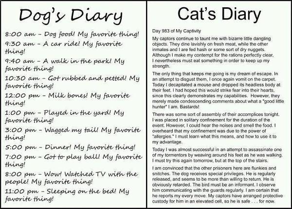 PETS_DiaryDogCat.jpg