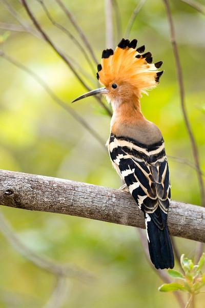 Madagascar_2013_FH0T2165.jpg
