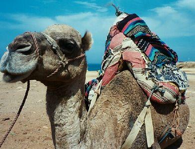 Honeymoon-Morocco