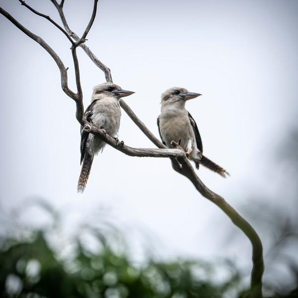 030319 birds _7.JPG
