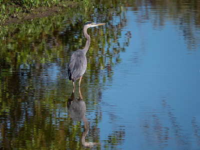 Hagerman Wildlife Refuge - 9/14-18