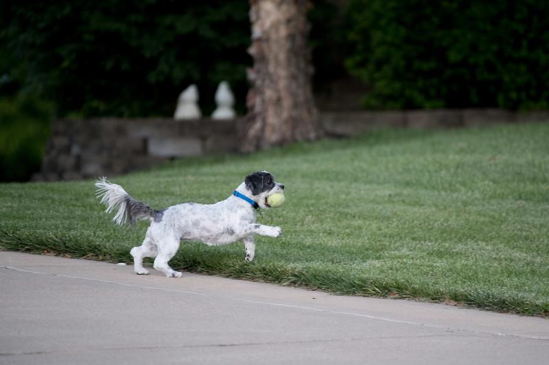 LuLu - Brady - Cooper Play Friends (27 of 109).jpg