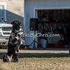 Disc dog fun - Saturday, March 28, 2015 - Frame: 3074