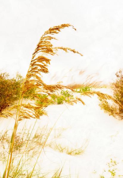 goldenbchfr.jpg