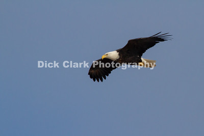 2019-01 Lake Barkley Eagles Weekend
