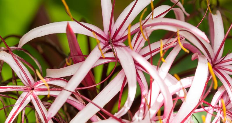 Hawaii Garden 21