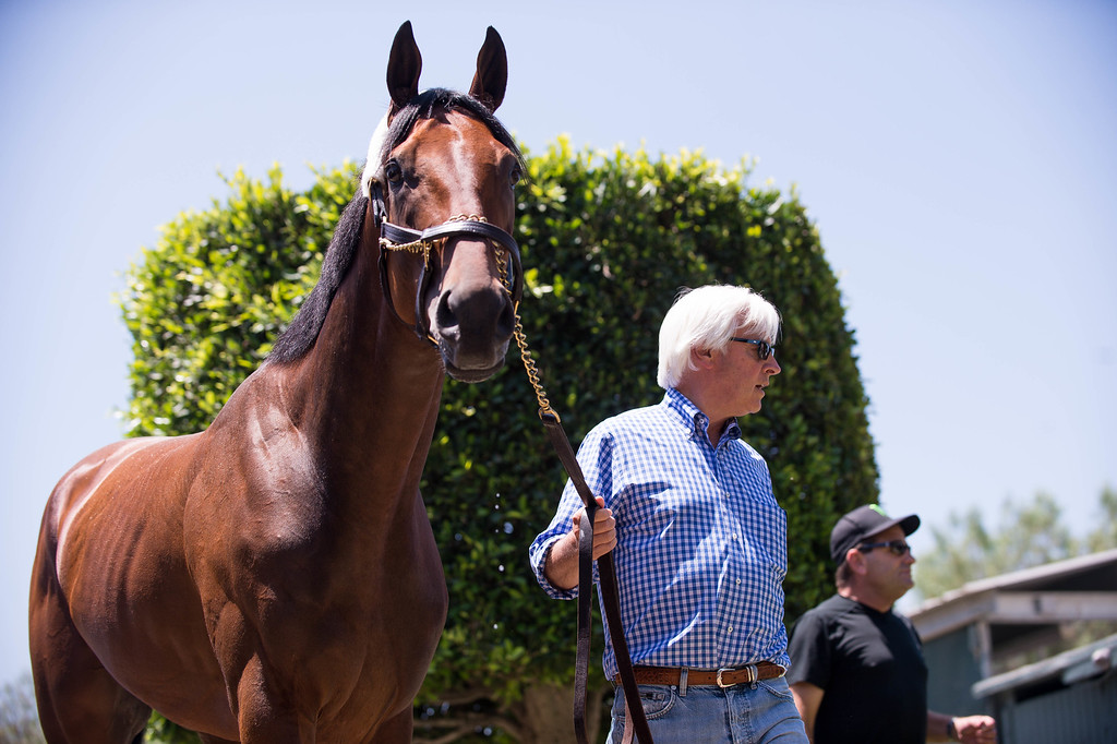 . Trainer Bob Baffert parades Triple Crown-winner American Pharoah as he return home to Baffert\'s barn at Santa Anita Thursday, June 18, 2015. American Pharoah broke a 37-year Triple Crown drought by winning the Kentucky Derby, Preakness and Belmont Stakes. (Photo by Sarah Reingewirtz/Pasadena Star-News)