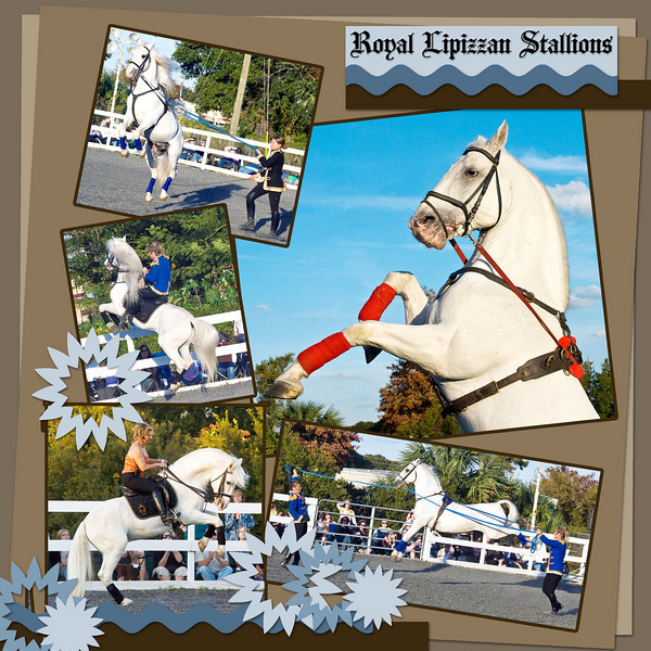Royal Lipizzan Stallions, performing at Freedom Ride, Orlando, Florida