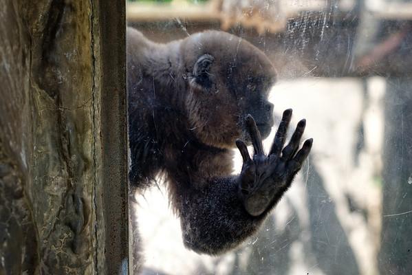 Medellin Zoo