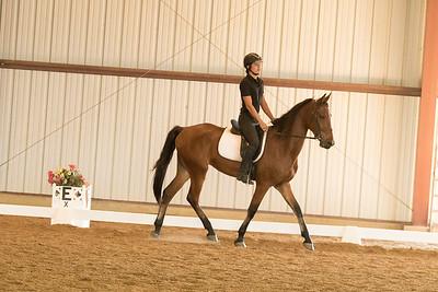 Horse 627