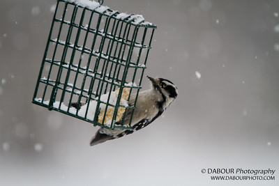 Backyard Bird Feeder 20110126