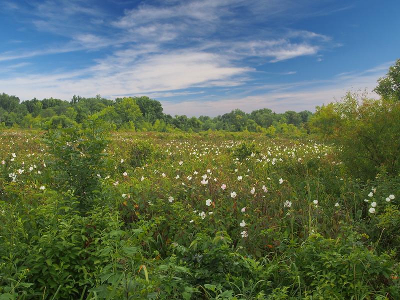 Jones Meadow.jpg