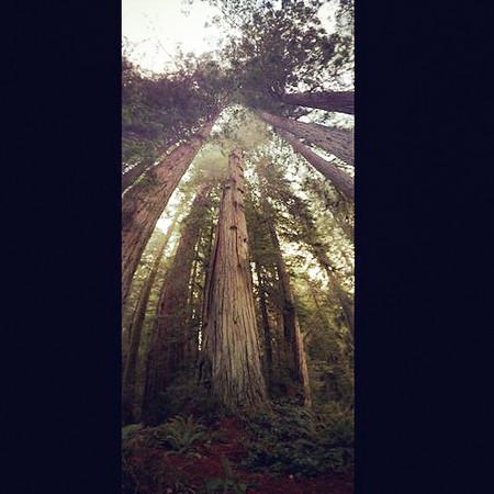 20141016_RedwoodsiPhone_0040.jpg