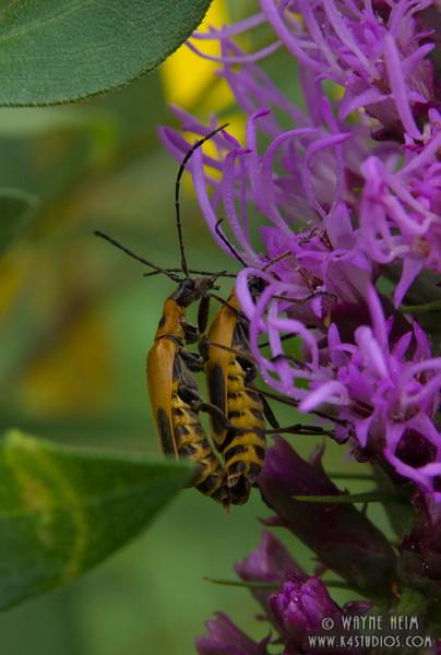 Mating Season  Photography by Wayne Heim