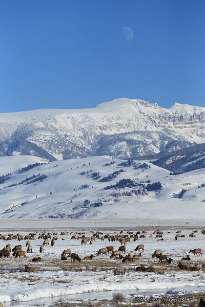 Under the Sleeping Indian at the National Elk Refuge - Jackson Hole, Wyoming