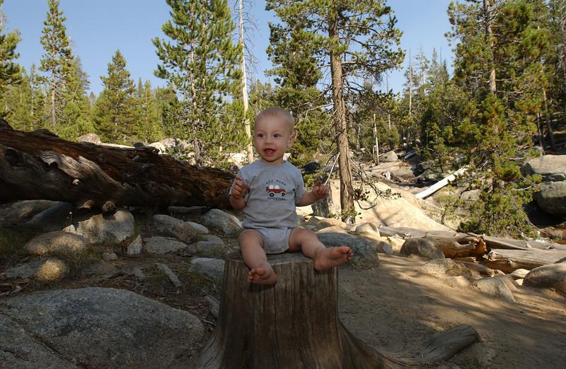 Max on Stump.jpg