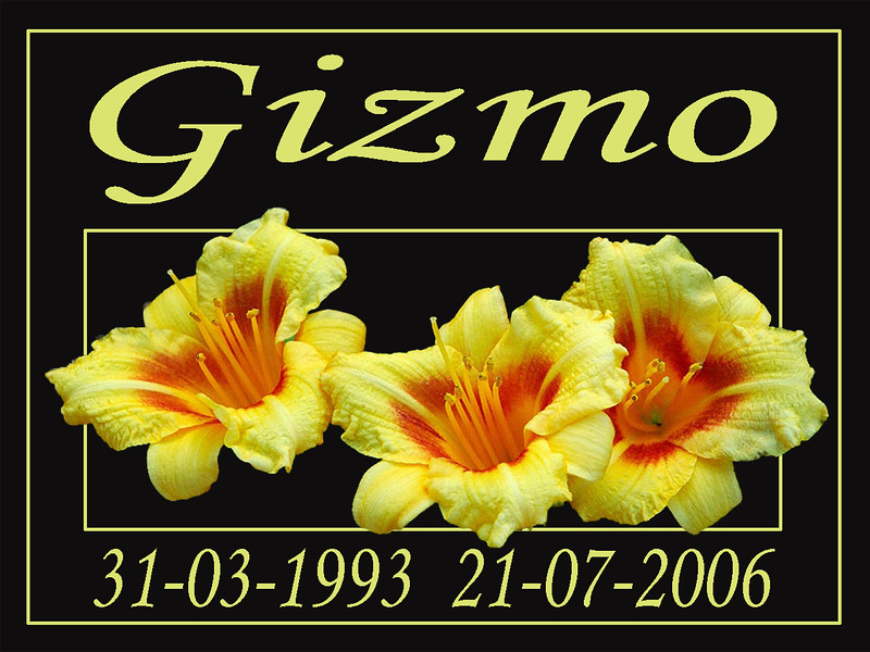 Gizmo 0 Tittel Texture.jpg