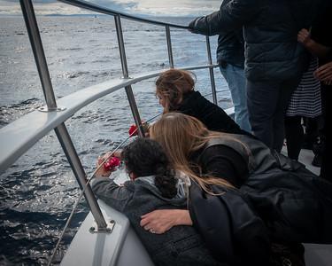 Sail On Steve