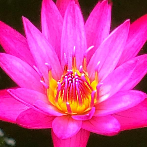Favicon 2 Lily.jpg