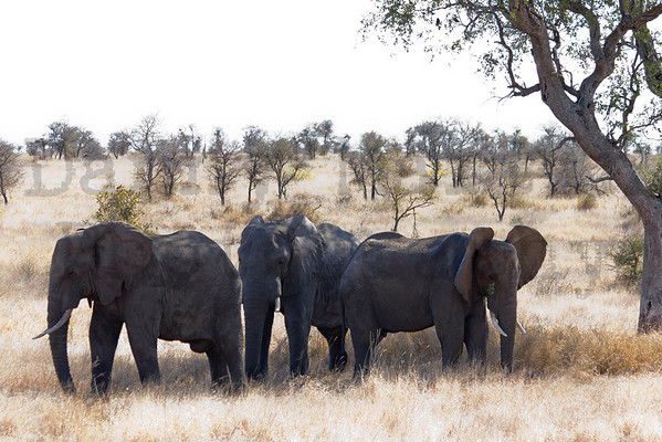 South Africa - Mammals, Reptiles, Insects, Landscapes & Flowers