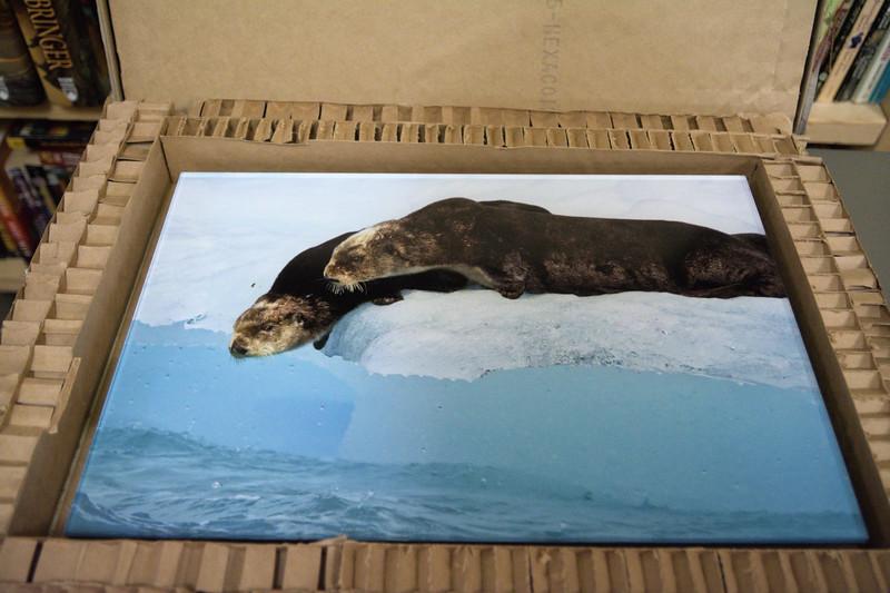 Acrylic Otters