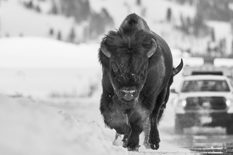 Yellowstone Feb 2018
